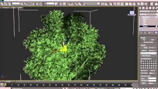 Speedtree и 3D MAX. Создание и анимация дерева.
