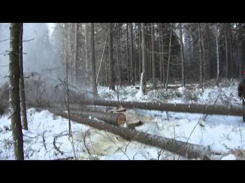 Лиственница (древесина) — Википедия