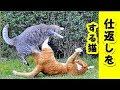 【猫 おもしろ話】仲間はずれの猫を保護・敵のボス猫に復讐する(すぐ調子にのる猫)【保護 泣ける話 感動 �