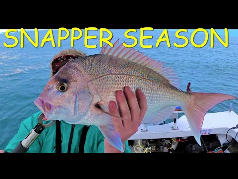 SNAPPER FISHING ON SOFT PLASTICS IN MORETON BAY                    (CURTIN ARTIFICIAL REEF)