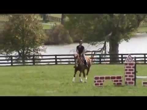 FLEET LAUREN-THOROUGHBRED SPORT HORSES