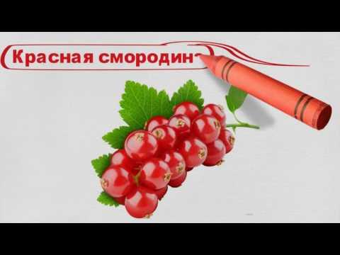 Русский язык в картинках. Слышим. пишем, говорим! Фрукты и ягоды.