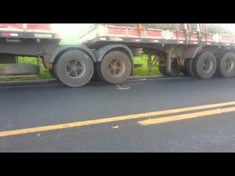 Le serpent qui n'aime pas les camions