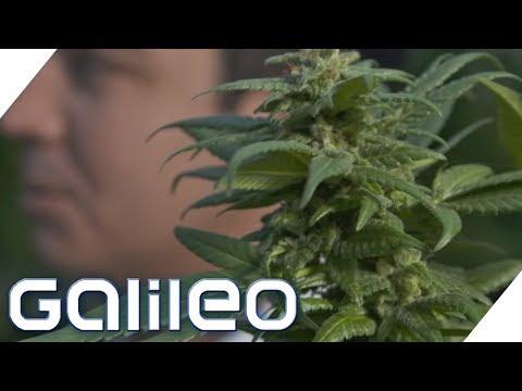Gibt es in Österreich wirklich Cannabis-Automaten? | Galileo | ProSieben
