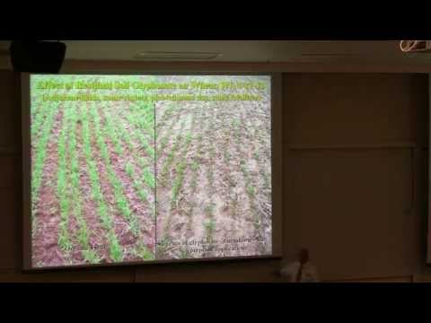 How Herbicides Destroy Soil Function and Ecology