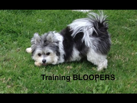 Dog Training Bloopers-Place command