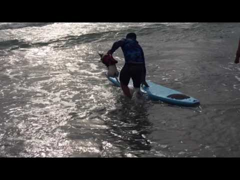2nd Annual Hang 20 Surf Dog Classic