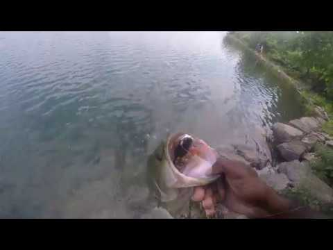 SilverLake Staten Island, New York Bass Fishing