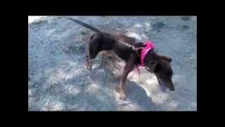 Puska - Animals Sense Sostre