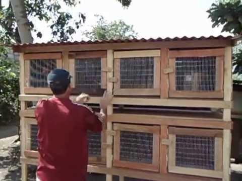 Jaula de gallos de pelea de 8 casilleros. - YouTube