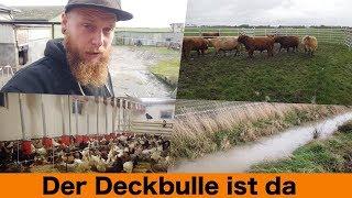 FarmVLOG#276 - Der Deckbulle ist da