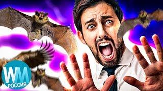10 Безобидных Животных, Которых Боятся Люди