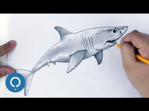Dessin de requin comment dessiner un requin blanc youtube - Dessin de requin blanc ...