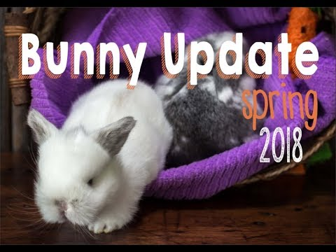 Bunny Update - Spring 2018 Rabbitry Tour