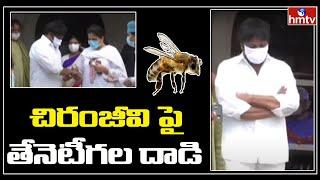 Breaking News : చిరంజీవి పై తేనెటీగల దాడి | hmtv