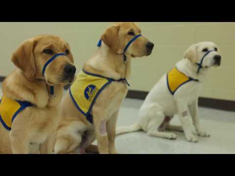 Momenta's Project New Orleans - Canine Companions for Independence - Dick Pitini
