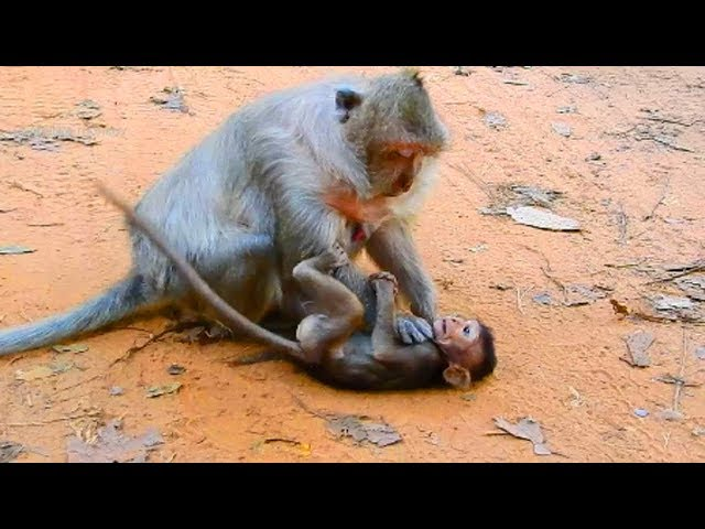 OMG! why tima doing like this on Timo, As neck hang on her baby monkey!