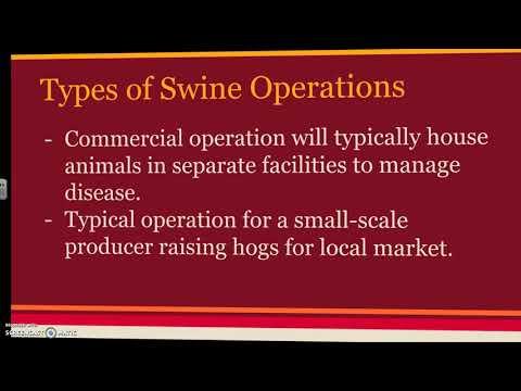 5 02 Animal Agriculture Swine
