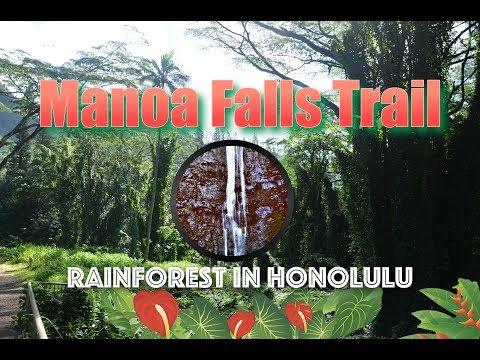 VLOG #003 Manoa Falls Trail