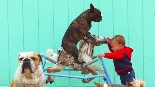Bébés mignons bébés ennuyeux - compilation de chiens drôles