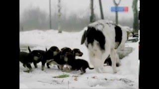 Хлебный день (Режиссёр Сергей Дворцевой). Фрагмент с собаками