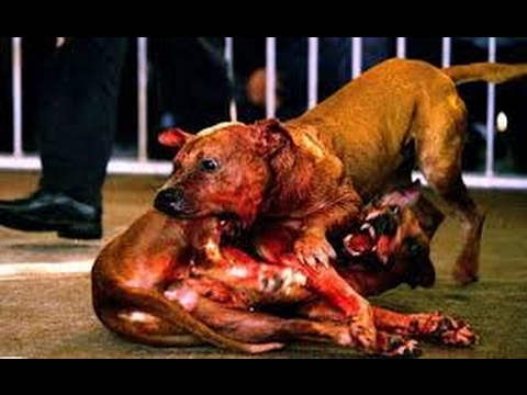 Most dangerous Dog Fight in history - YouTube - photo#24