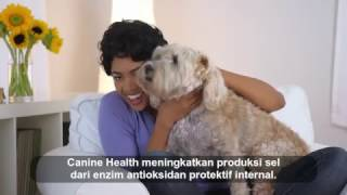 Canine Health.  Indonesian | HarveyConner