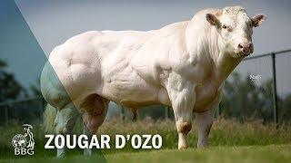 ZOUGAR D'OZO - Portes ouvertes BBG 2017