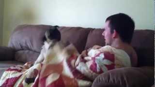 Dog Vs Quilt