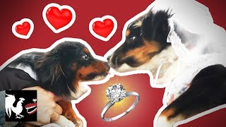 Dog Wedding: The Dumbest Thing We've Ever Done | RT Life