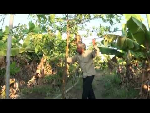 18 Months of Organic Farming in My New Farm_Subhash Sharma part 4 of 5