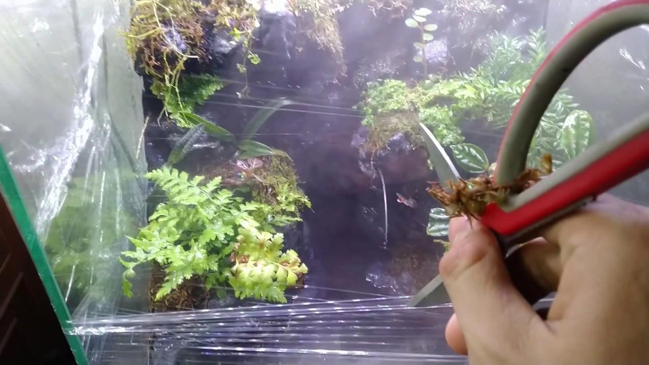 Kinh nghiệm dưỡng cây cho hồ bán cạn mới – Paludarium Care
