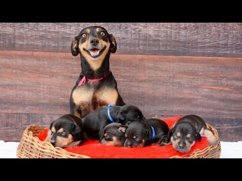 Dog With Cute Maternity Photos Poses Again With Adorable Newborn Puppies