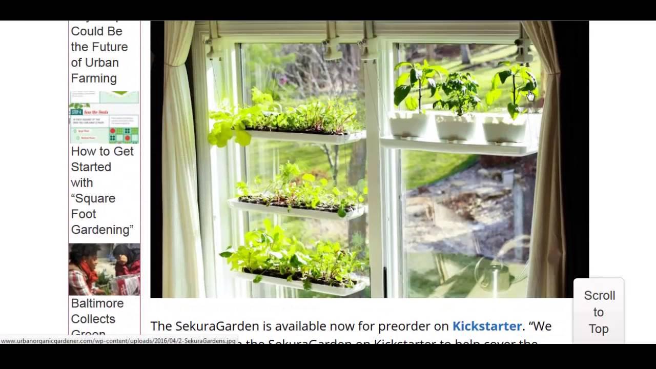Hanging Window Garden Kit