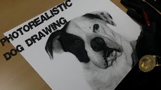 How to draw a Pit bull / Dalmatian