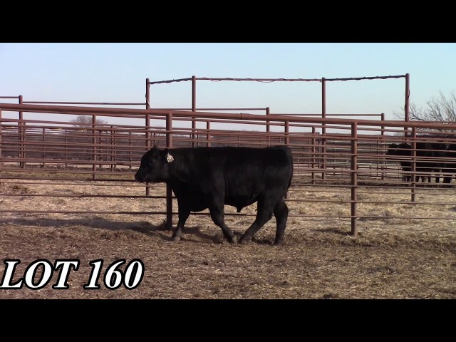 Mead Angus Farms Lot 160