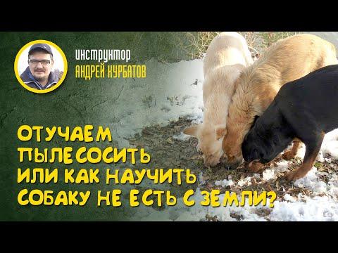 Отучаем пылесосить или как научить собаку не есть с земли? (Инструктор Андрей Курбатов)