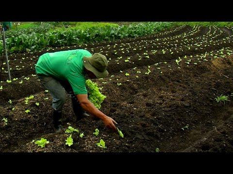 Cómo Administrar una Granja Orgánica con Conciencia Ecológica - TvAgro por Juan Gonzalo Angel