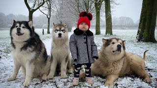 Baby And Wolves Play In The Snow! (Cutest Ever!!)