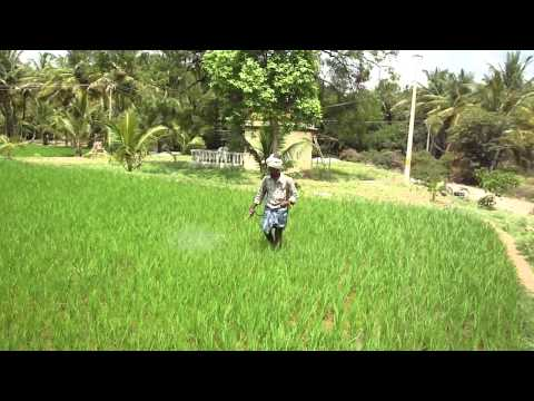 Spraying Rice with soluble silicic acid.MP4