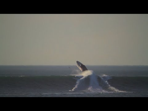 Donzi 43 ZR Hits 40+ Ft Wave In Pacific Ocean, Huge Air!!! Shot by Pete Koff