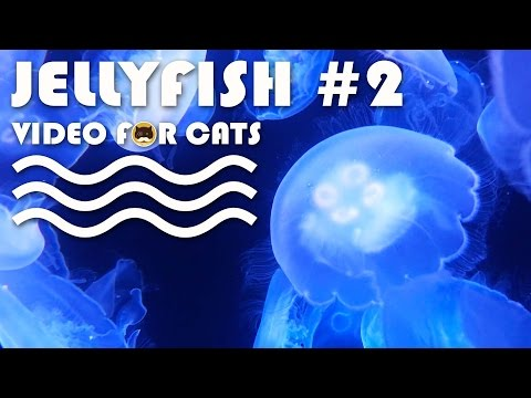 FISH VIDEO FOR CATS - Jellyfish #2. Entertainment Video For Cats To Watch.