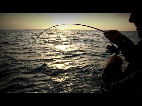 TRACK MOVING SNAPPER - YouFishTV