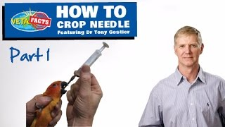 How to Crop Needle PART 1