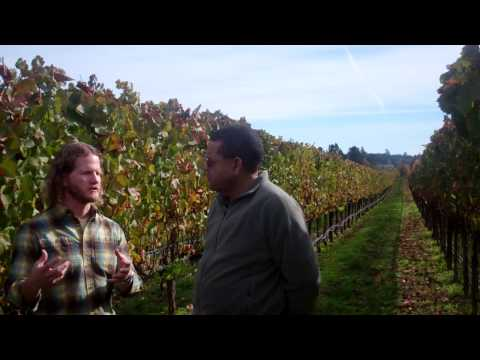 WINEMAKER SERIES: River Road Family Vineyards and Winery ~ Vineyard, by DC Productions