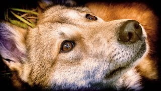 Фильм про охоту в тайге