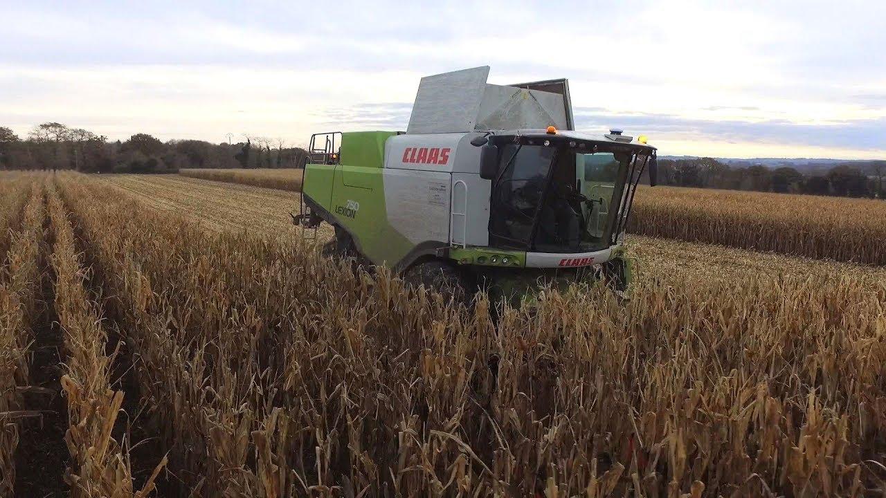 Grain 2019