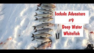 Whitefish Catch Clean Ice Fishing NFN Icehole Adventure 9 2020