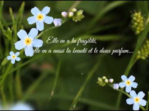 Connu Carte L'amitié est comme une fleur de printemps - YouTube CL86