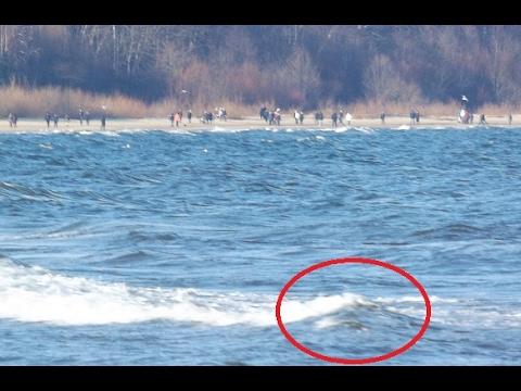 Dwugłowy potwór morski wyrzucony na brzeg! Istota przeraża...
